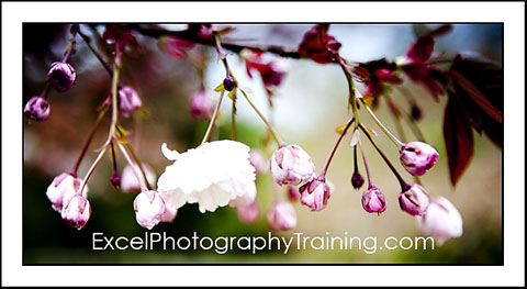 Essex Photography Training